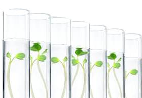 seedlings in test tubes