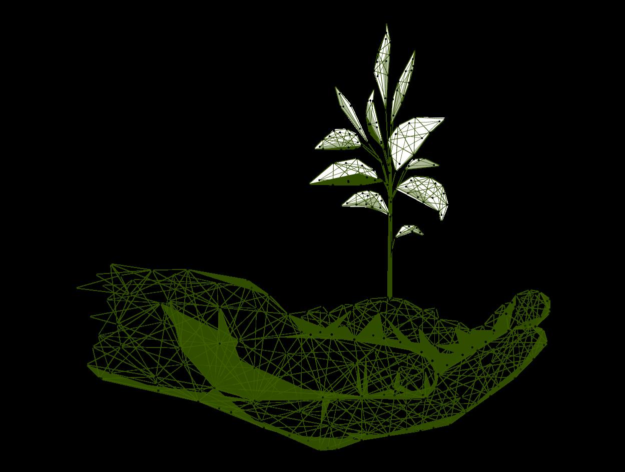 Wireframe Seedling